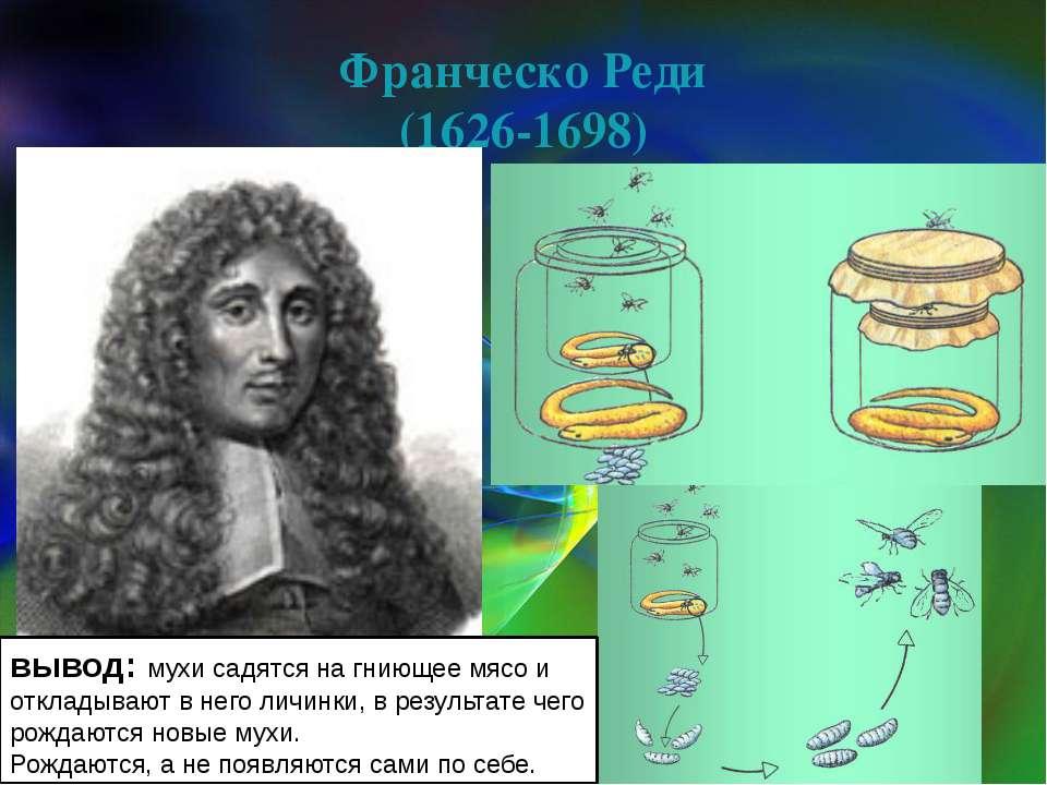 Франческо Реди (1626-1698) вывод: мухи садятся на гниющее мясо и откладывают ...
