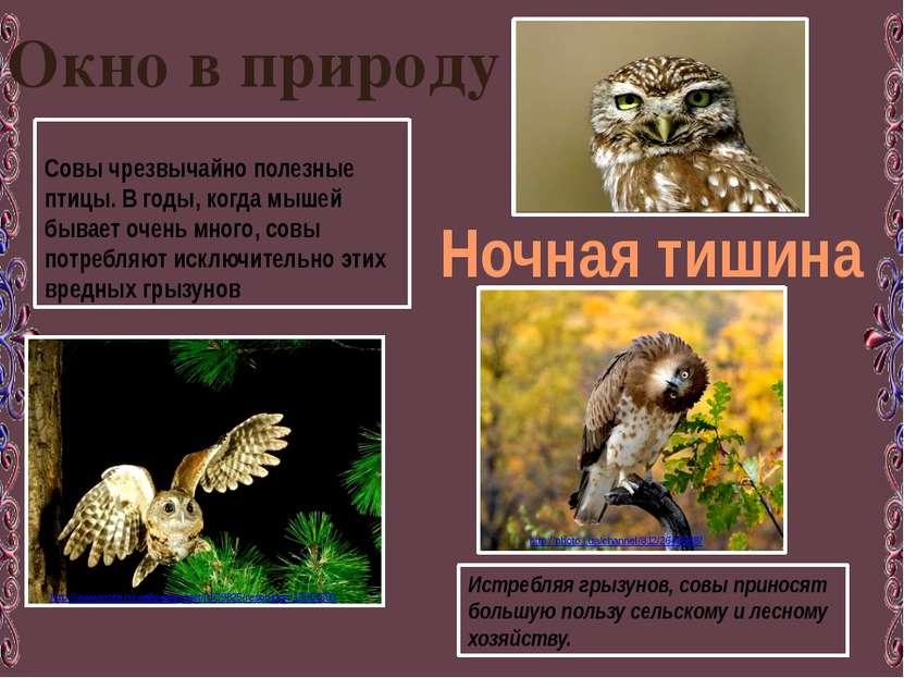 Окно в природу Ночная тишина Совы чрезвычайно полезные птицы. В годы, когда м...