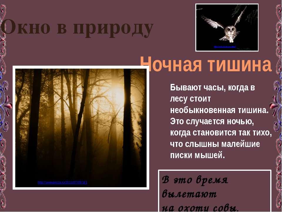 Окно в природу Ночная тишина Бывают часы, когда в лесу стоит необыкновенная т...