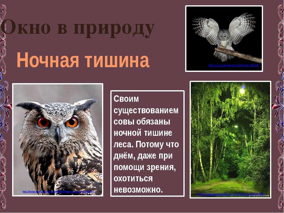 Окно в природу Ночная тишина Своим существованием совы обязаны ночной тишине ...