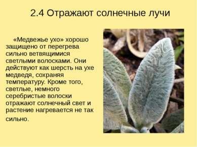 2.4 Отражают солнечные лучи «Медвежье ухо» хорошо защищено от перегрева сильн...