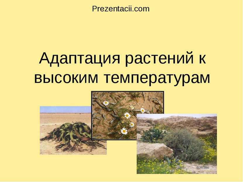 Адаптация растений к высоким температурам . Prezentacii.com