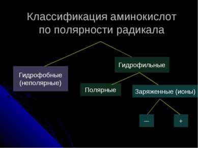 Гидрофобные (неполярные) Классификация аминокислот по полярности радикала Гид...