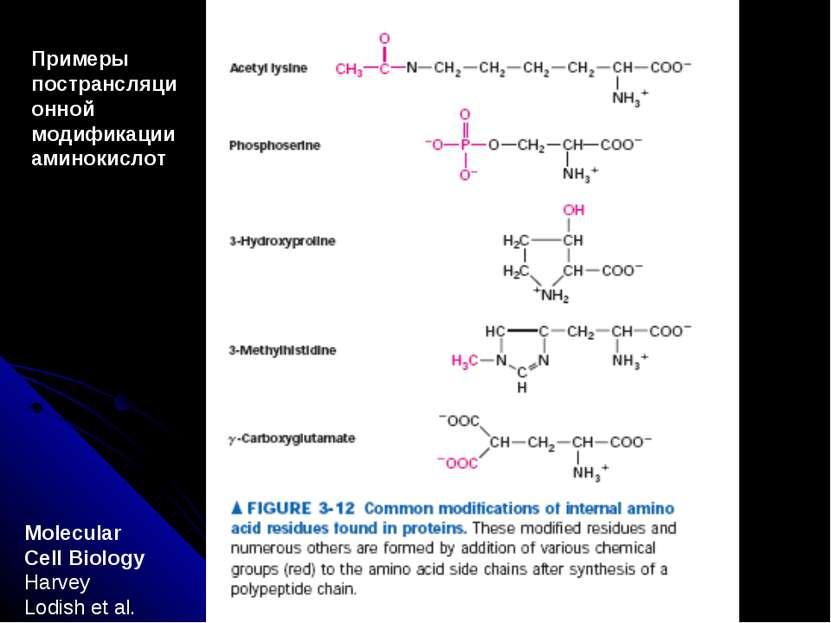 Molecular Cell Biology Harvey Lodish et al. Примеры пострансляционной модифик...
