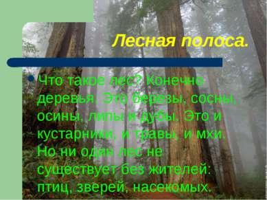Лесная полоса. Что такое лес? Конечно деревья. Это березы, сосны, осины, липы...