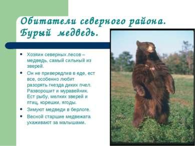 Обитатели северного района. Бурый медведь. Хозяин северных лесов – медведь, с...