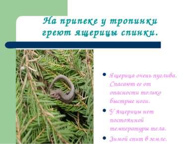 На припеке у тропинки греют ящерицы спинки. Ящерица очень пуглива. Спасают ее...