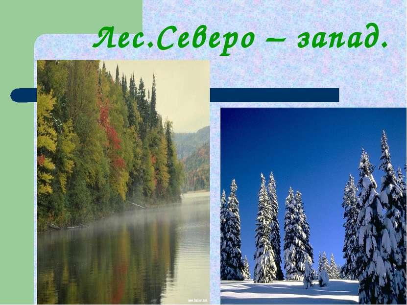 Лес.Северо – запад.