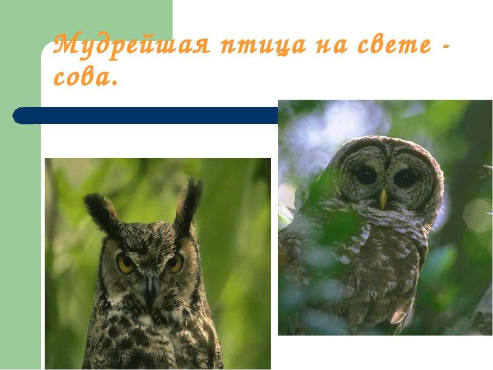 Мудрейшая птица на свете - сова.