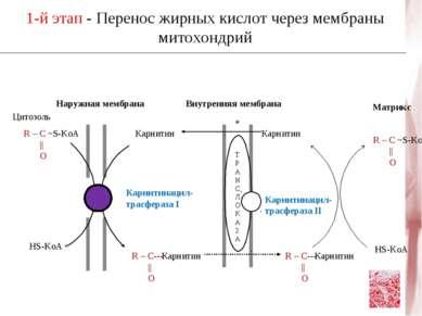 Наружная мембрана Внутренняя мембрана Цитозоль R – C ~S-KoA || O HS-KoA R – C...