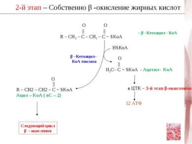2-й этап – Собственно β -окисление жирных кислот β –Кетоацил– КоА тиолаза HSК...