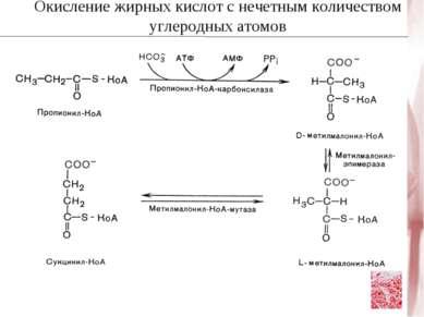 Окисление жирных кислот с нечетным количеством углеродных атомов
