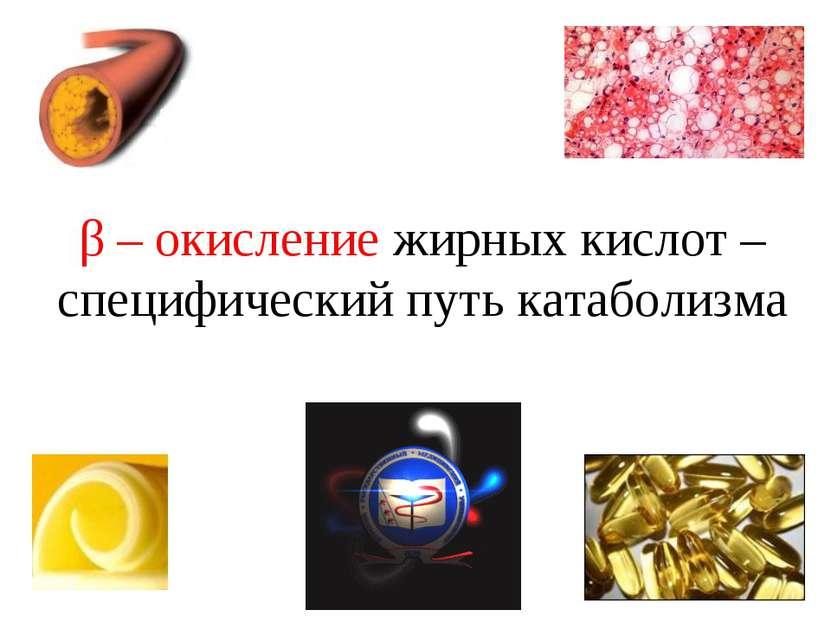 β – окисление жирных кислот – специфический путь катаболизма