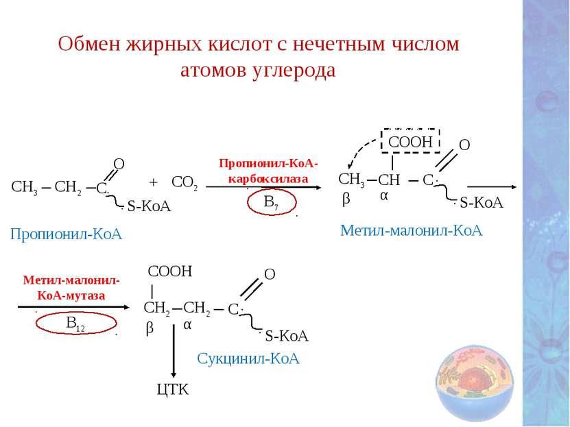 Обмен жирных кислот с нечетным числом атомов углерода Метил-малонил- КоА-мута...