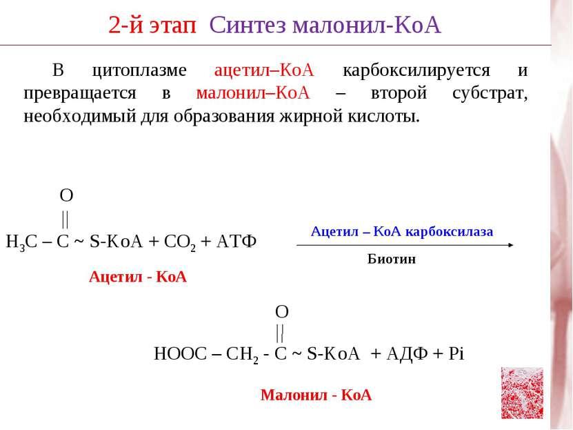 В цитоплазме ацетил–КоА карбоксилируется и превращается в малонил–КоА – второ...