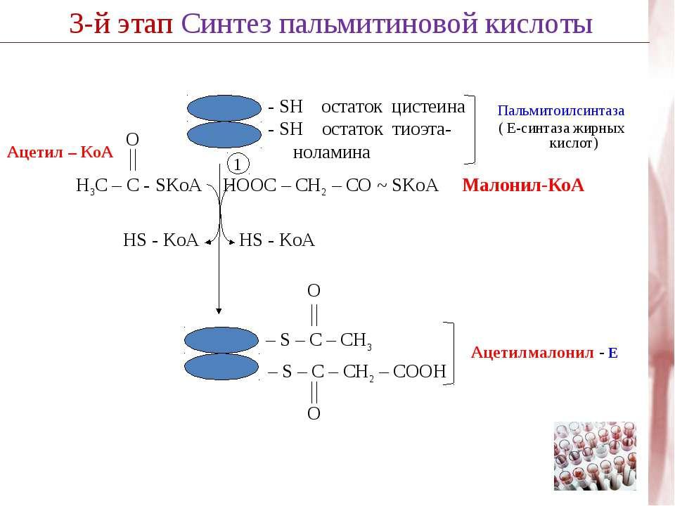 3-й этап Синтез пальмитиновой кислоты 1 HS - KoA HOOC – CH2 – CО ~ SKoA Малон...