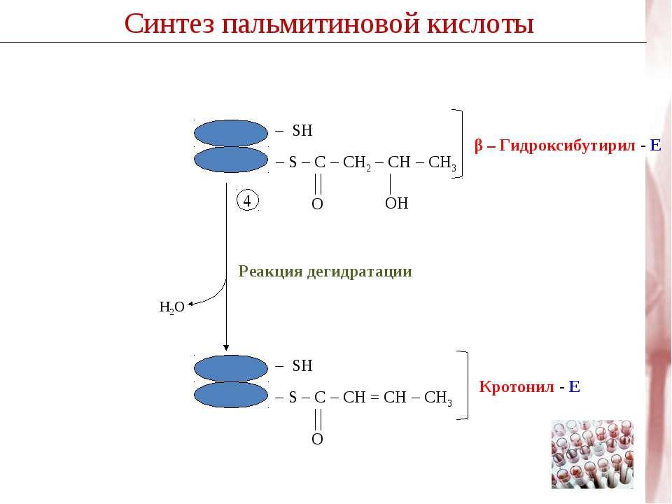 Синтез пальмитиновой кислоты H2O Реакция дегидратации 4