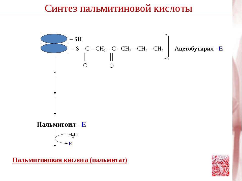 Пальмитиновая кислота (пальмитат) Пальмитоил - Е Н2О Е Синтез пальмитиновой к...