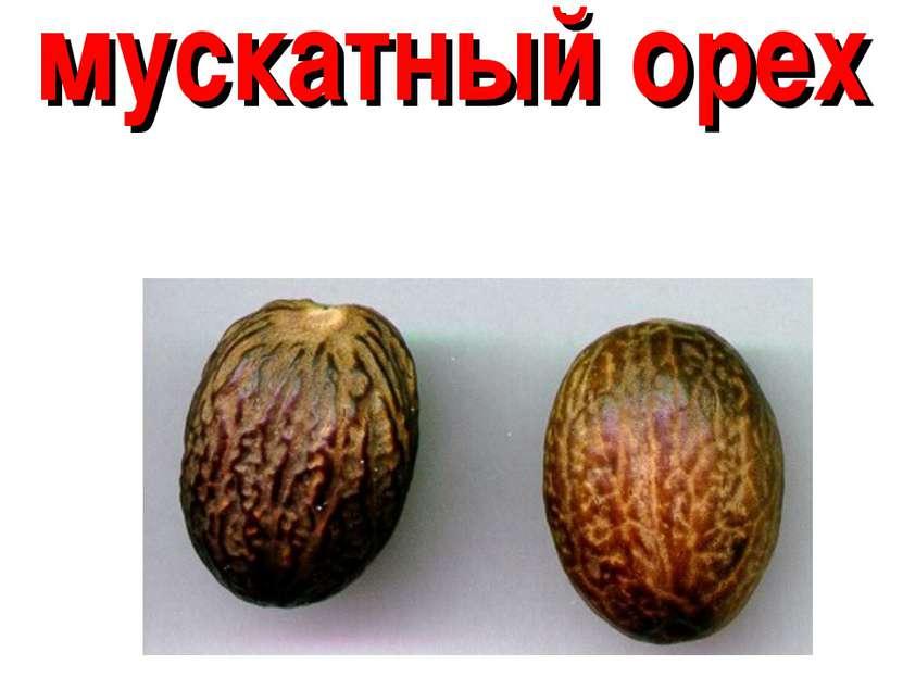 мускатный орех