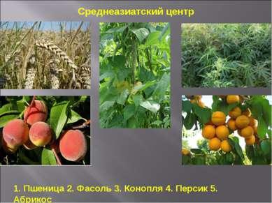 1. Пшеница 2. Фасоль 3. Конопля 4. Персик 5. Абрикос Среднеазиатский центр
