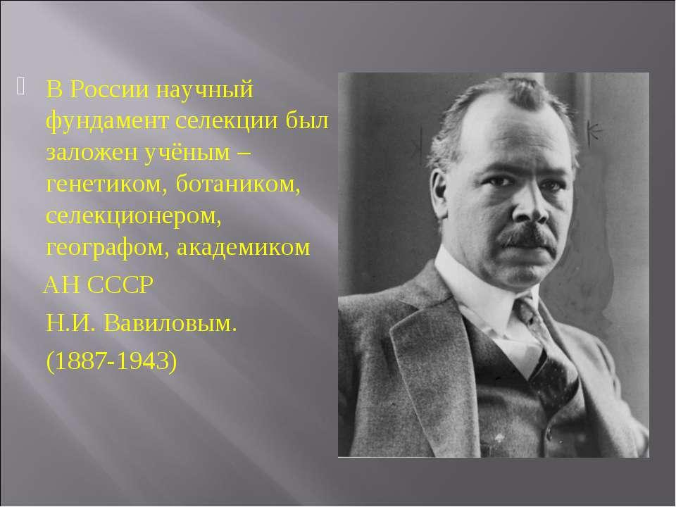 В России научный фундамент селекции был заложен учёным – генетиком, ботаником...