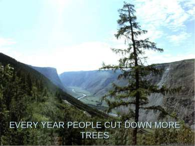 EVERY YEAR PEOPLE CUT DOWN MORE TREES