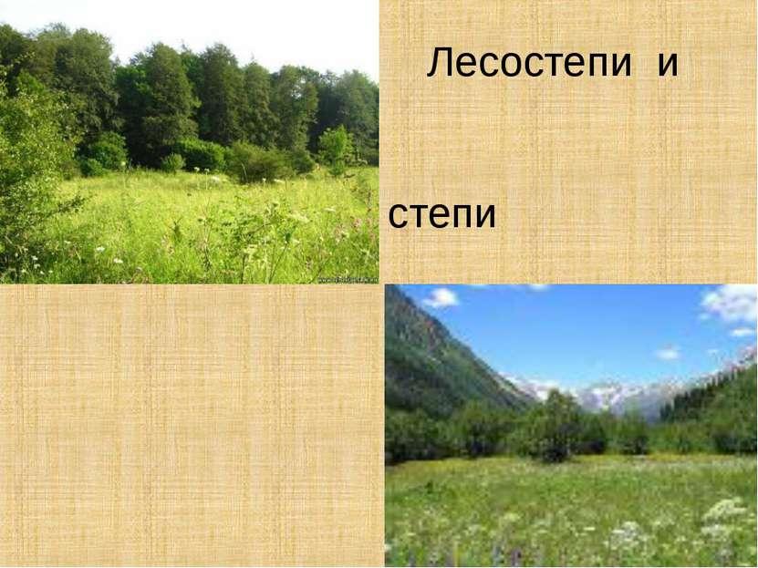 Лесостепи и степи