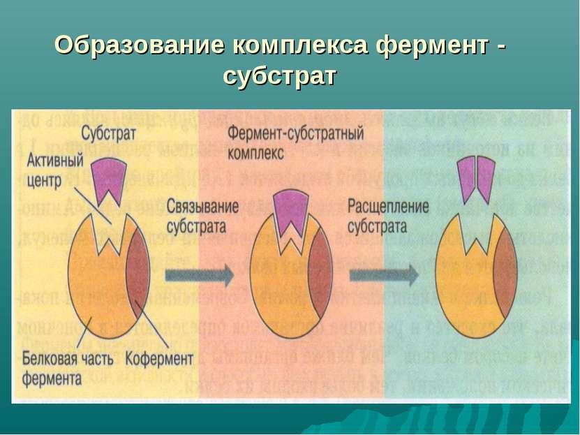 Образование комплекса фермент - субстрат