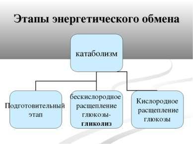 Этапы энергетического обмена