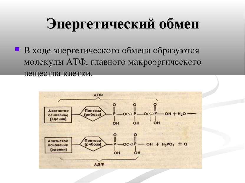 Энергетический обмен В ходе энергетического обмена образуются молекулы АТФ, г...