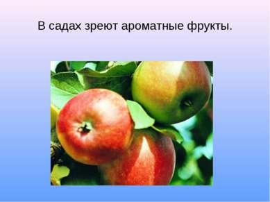 В садах зреют ароматные фрукты.