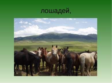 лошадей,