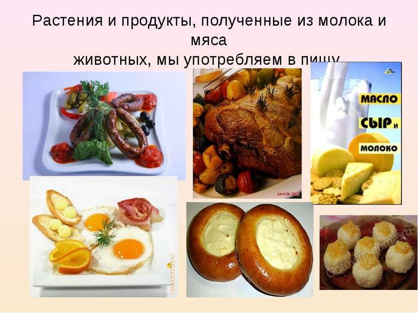 Растения и продукты, полученные из молока и мяса животных, мы употребляем в п...