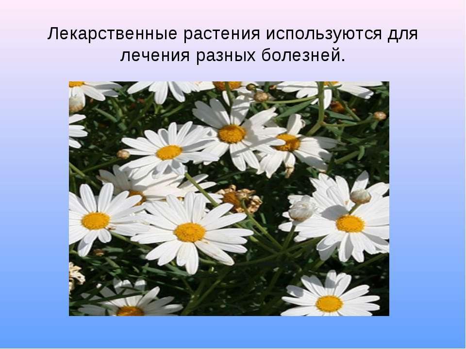 Лекарственные растения используются для лечения разных болезней.