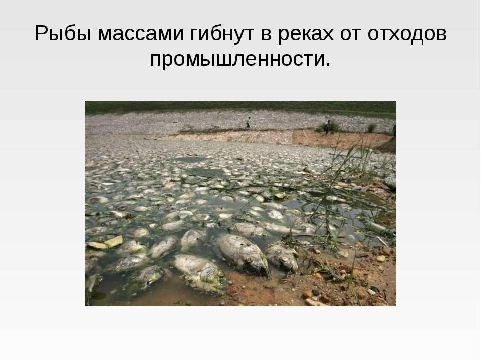 Рыбы массами гибнут в реках от отходов промышленности.