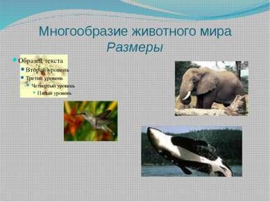 Многообразие животного мира Размеры