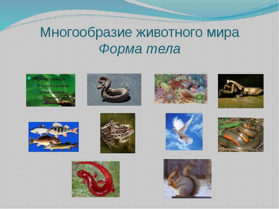 Многообразие животного мира Форма тела