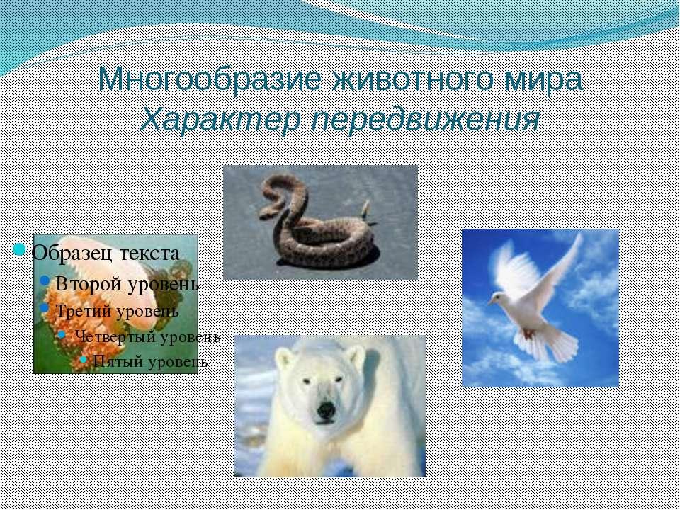 Многообразие животного мира Характер передвижения