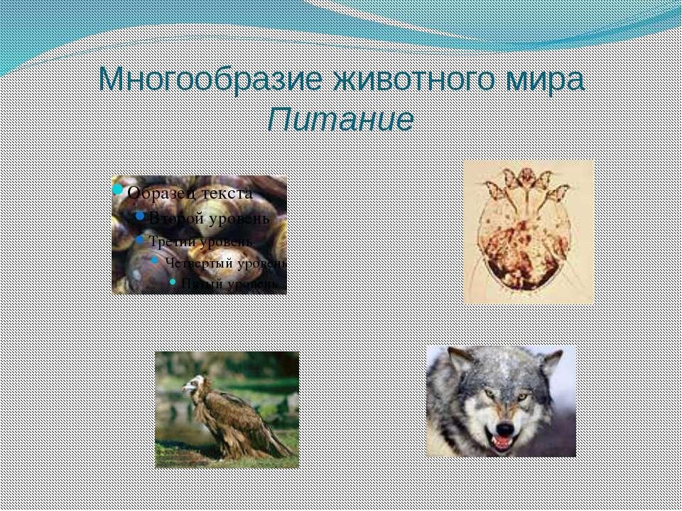 Многообразие животного мира Питание
