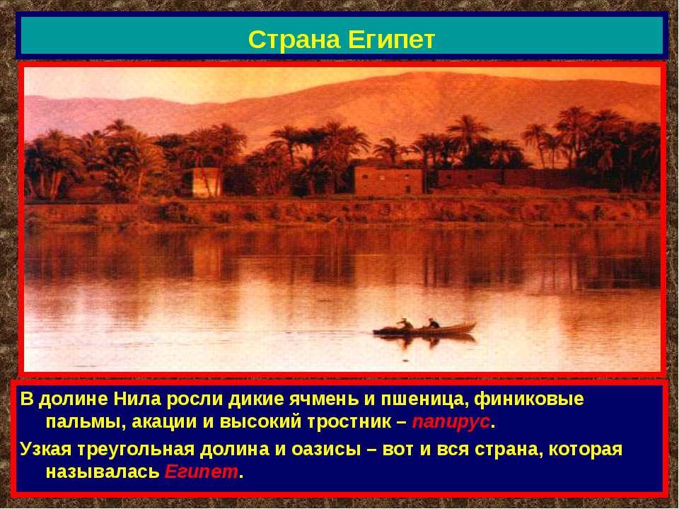 Страна Египет В долине Нила росли дикие ячмень и пшеница, финиковые пальмы, а...