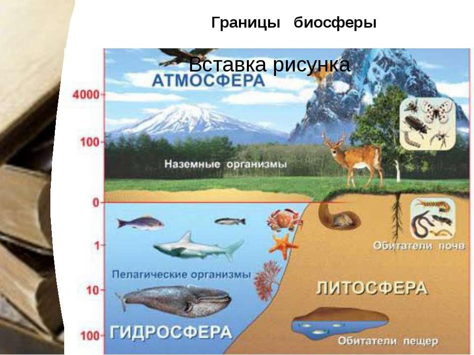 Границы биосферы