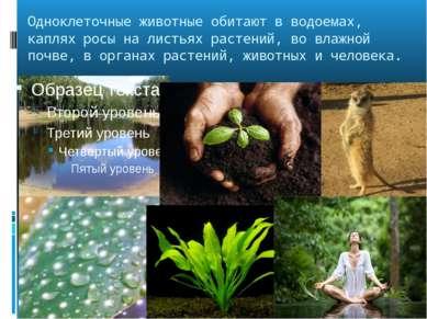 Одноклеточные животные обитают в водоемах, каплях росы на листьях растений, в...