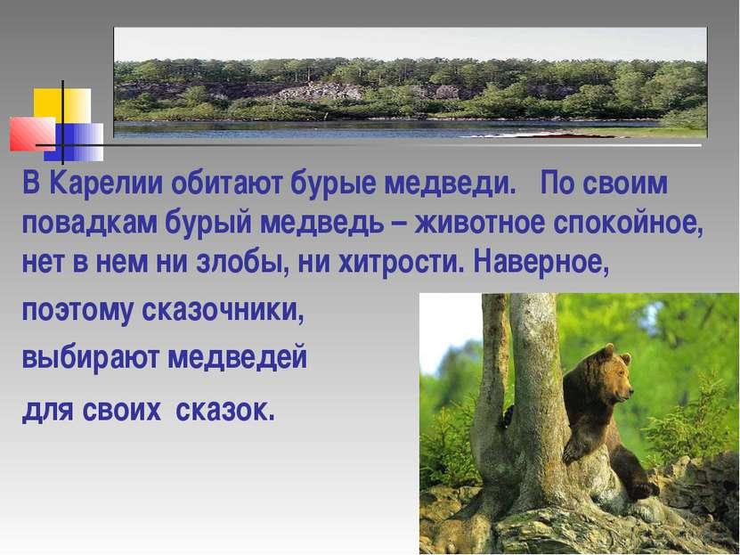 В Карелии обитают бурые медведи. По своим повадкам бурый медведь – животное с...
