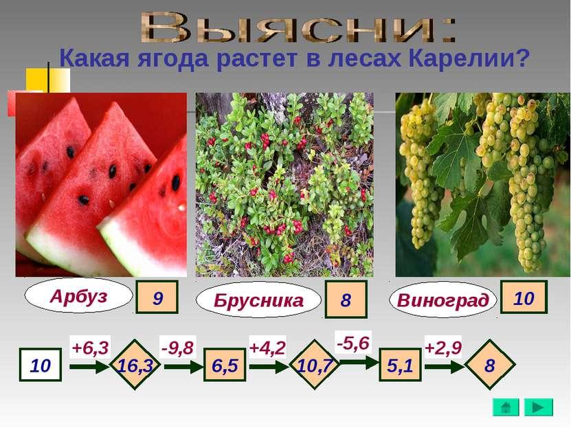 Какая ягода растет в лесах Карелии? Арбуз Виноград 10 +6,3 -9,8 +4,2 -5,6 +2,...