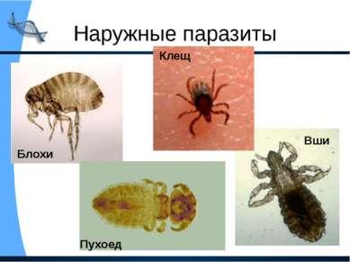 Наружные паразиты Вши Блохи Пухоед Клещ