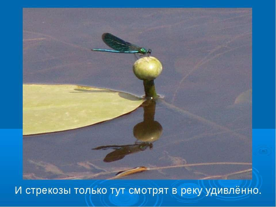И стрекозы только тут смотрят в реку удивлённо.