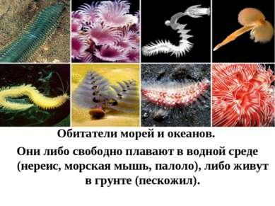 Обитатели морей и океанов. Они либо свободно плавают в водной среде (нереис, ...