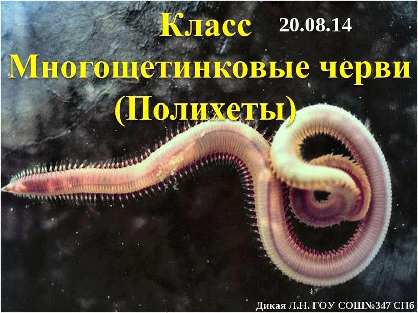 * Дикая Л.Н. ГОУ СОШ№347 СПб