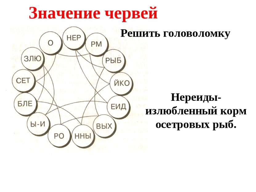 Значение червей Решить головоломку Нереиды- излюбленный корм осетровых рыб.