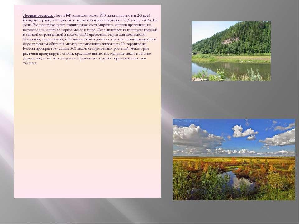 Лесные ресурсы. Леса в РФ занимают около 800 млн.га, или почти 2/3 всей площа...